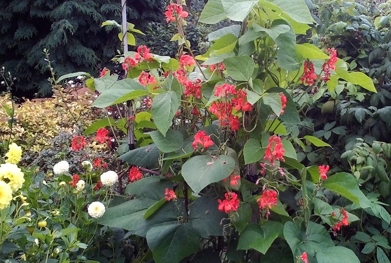 bulbous flowers and red flowers on tall gree growth