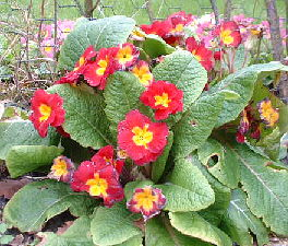 a small cluster of red flowers