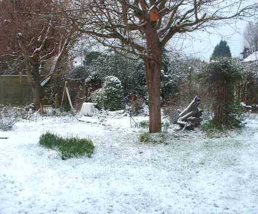 a light covering of snow on grass wit some daffodils, a bare tree with a bird nesting box  and other garden items.